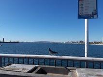 Mooie duif op de achtergrond van het overzees Een duif zit op de omheining dichtbij het overzees Achtergrond Duif op de omheining royalty-vrije stock foto