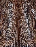 Echte huid van luipaard Royalty-vrije Stock Afbeelding