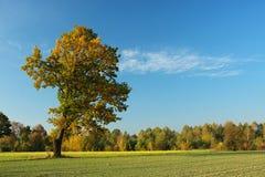 Mooie, eenzame boom Stock Foto