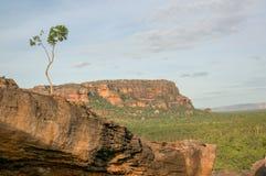 mooie eenzame boom bij het Nadab-Vooruitzicht in ubirr, kakadu nationaal park - Australië royalty-vrije stock fotografie
