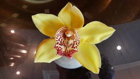 Mooie Eigenaardige Gele Bloem royalty-vrije stock afbeeldingen