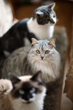Mooie en blije katten royalty-vrije stock afbeeldingen