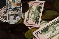 Mooie en mooie contant geldfoto royalty-vrije stock foto's