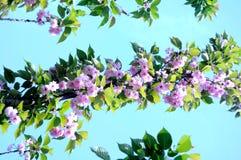Mooie en elegante bloem stock foto's