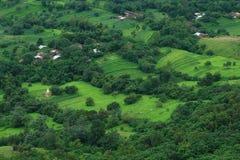 Mooie en exotische groene scène royalty-vrije stock fotografie