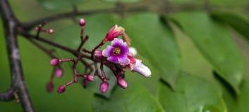 Mooie en extravagante micro- roze bloem stock foto's