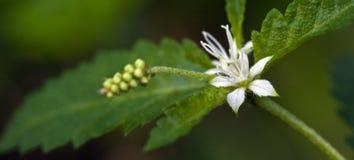 Mooie en extravagante micro- witte bloem Stock Afbeeldingen