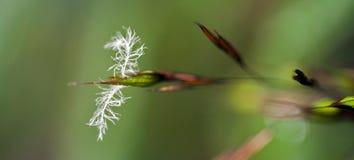 Mooie en extravagante micro- witte bloem Royalty-vrije Stock Afbeelding