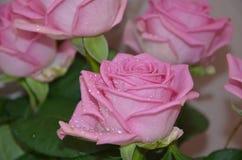 Mooie en gevoelige bloemen roze kleur Stock Afbeeldingen