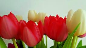Mooie en kleurrijke tulpen stock foto's