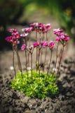 Mooie en vreedzame heldere dichte omhooggaande foto van installaties en bloemen met zorgvuldig het modelleren Stock Afbeelding