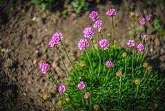 Mooie en vreedzame heldere dichte omhooggaande foto van installaties en bloemen met zorgvuldig het modelleren Royalty-vrije Stock Afbeelding