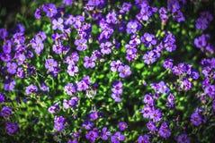 Mooie en vreedzame heldere dichte omhooggaande foto van installaties en bloemen met zorgvuldig het modelleren Stock Foto's