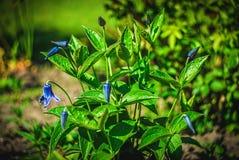 Mooie en vreedzame heldere dichte omhooggaande foto van installaties en bloemen met zorgvuldig het modelleren Royalty-vrije Stock Fotografie