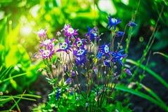 Mooie en vreedzame heldere dichte omhooggaande foto van installaties en bloemen met zorgvuldig het modelleren Stock Afbeeldingen