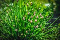 Mooie en vreedzame heldere dichte omhooggaande foto van installaties en bloemen met zorgvuldig het modelleren Royalty-vrije Stock Afbeeldingen