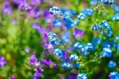 Mooie en vreedzame heldere dichte omhooggaande foto van installaties en bloemen met zorgvuldig het modelleren Royalty-vrije Stock Foto's