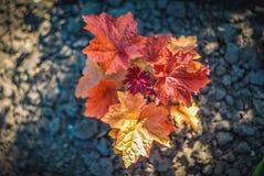 Mooie en vreedzame heldere dichte omhooggaande foto van installaties en bloemen met zorgvuldig het modelleren Royalty-vrije Stock Foto