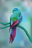 Mooie exotische papegaai op vage achtergrond Stock Foto