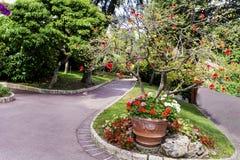 Mooie exotische tuin in Monaco stock foto