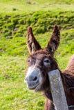 Mooie ezel op zonnige dag Close-up stock fotografie