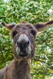 Mooie ezels gelukkige boom en groene kleur stock afbeelding
