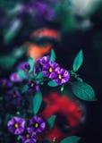 Mooie fee dromerige magische purpere rode bloemen met donkergroene blauwe bladeren, onscherpe achtergrond Royalty-vrije Stock Foto