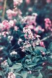 Mooie fee dromerige magische rode roze bloemen met donkergroene bladeren Royalty-vrije Stock Fotografie