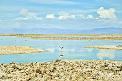 Mooie Flamingo Royalty-vrije Stock Afbeelding