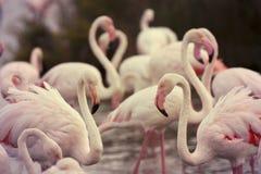Mooie Flamingo's Stock Afbeeldingen