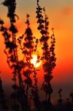 Mooie flora in ochtendzonneschijn stock fotografie