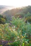 Mooie flora in ochtendzonneschijn stock afbeeldingen