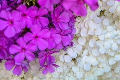 Mooie foto van weelderige bos van kleine witte bloemen Royalty-vrije Stock Foto's