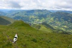 Mooie Fox-terrier die over een Vallei in Frankrijk letten op Royalty-vrije Stock Fotografie