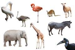 Mooie geïsoleerde dieren en vogels Royalty-vrije Stock Foto's