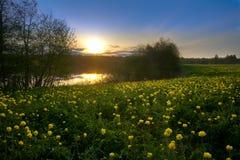 Mooie gebiedsbloemen Stock Foto's