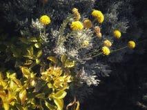 Mooie geel royalty-vrije stock afbeeldingen