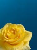 mooie geel nam met waterdalingen toe Royalty-vrije Stock Foto