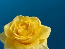 mooie geel nam met waterdalingen toe Stock Foto's