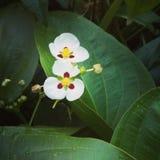 Mooie gefiltreerde lotusbloembloem met textuureffect Stock Foto