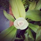 Mooie gefiltreerde lotusbloembloem met textuureffect Stock Afbeeldingen
