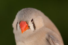 Mooie gekleurde vogel Stock Foto's