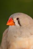 Mooie gekleurde vogel Royalty-vrije Stock Foto