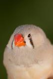 Mooie gekleurde vogel Stock Afbeelding