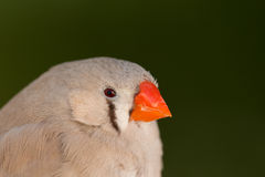 Mooie gekleurde vogel Royalty-vrije Stock Afbeeldingen