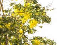 Mooie gele bloeibloemen stock foto's