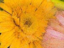 Mooie Gele Bloem Stock Afbeeldingen