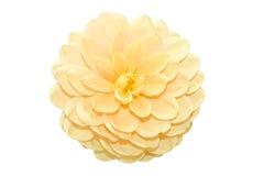 Mooie gele bloem Royalty-vrije Stock Afbeeldingen