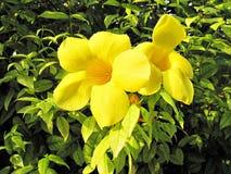 Mooie Gele Bloem Royalty-vrije Stock Afbeelding