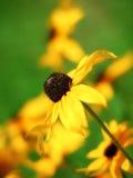 Mooie gele bloem Royalty-vrije Stock Fotografie